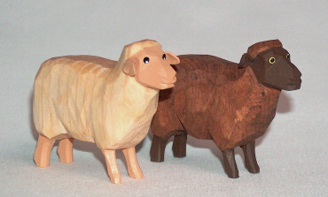 Schaf stehend Kopf hoch